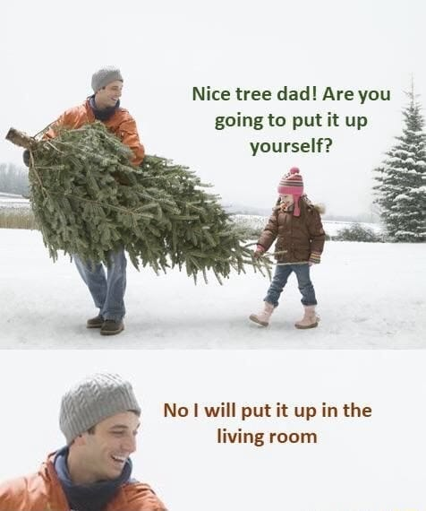 Nice tree dad! Are you going to put it up yourself? No I will put it up in the living room.