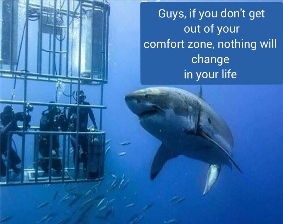 Shark telling some divers to get out of their comfort zone
