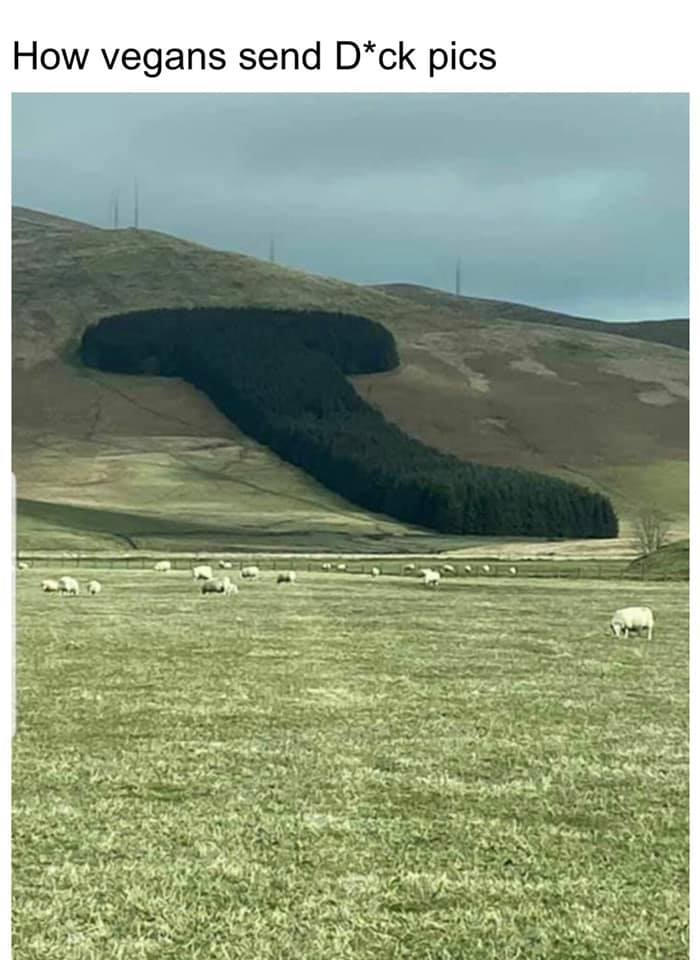 A dick shaped forest on the side of a hill. Vegan dick pics.