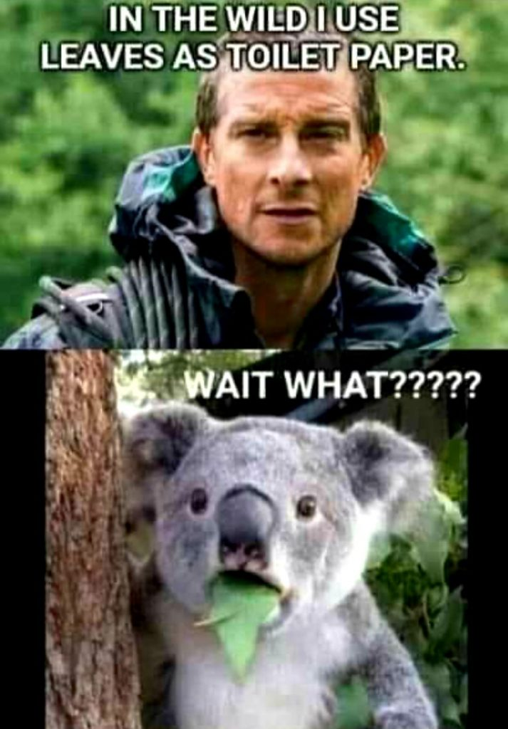 In the wild, i use leaves as toilet paper. The koala bear: Wait what?