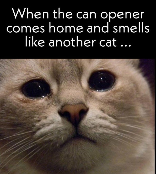 When the can opener comes home and smells like another cat ....