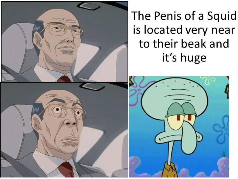 The penis of a squid is located very near to their beak and it's huge.