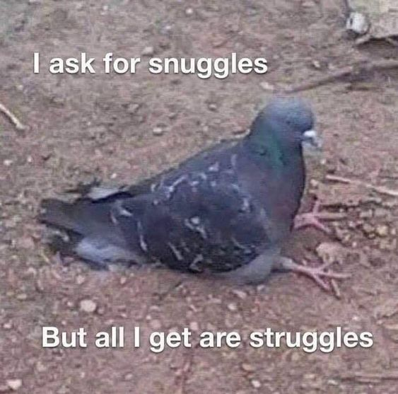 I ask for snuggles, but all i get are struggles.
